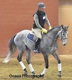 Racehorse Retrain